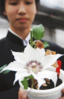 直径13cmの花を咲かせた