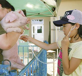 ロートやシリコンチューブなど身近にあるもので作った聴診器で豚の心臓の拍動を聞く参加者