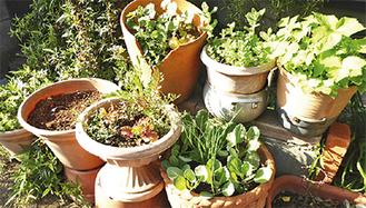 鉢を密集させるのも日陰ができてお勧め