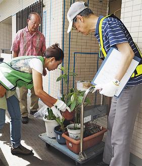 植物を一つひとつ丁寧に台車で運ぶボランティア