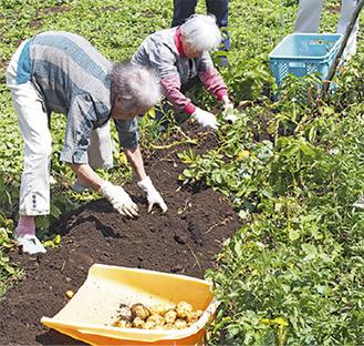 ジャガイモ掘りを楽しむ利用者