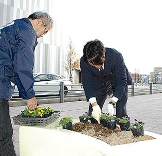 冬花へ植え替え
