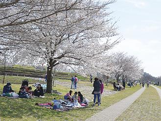 桜を楽しむ多くの来園者(相模三川公園で・26日撮影)