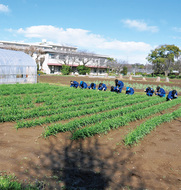 「JGAP 穀物(小麦)」の認証取得