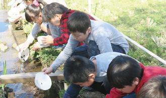 幼虫と餌を小川に放つ児童