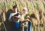 移住後、初めての収穫 1995年秋