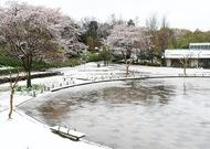 恵みの雪ふる