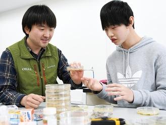 研究室で培地を手入れする西海先生(左)と岩村さん(右)=リコーフューチャーハウス(写真下)3階の「コサイエ」