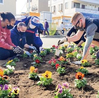 パンジーを植えるボランティア