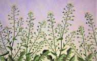 野花の刺繍展