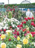 バラの楽園