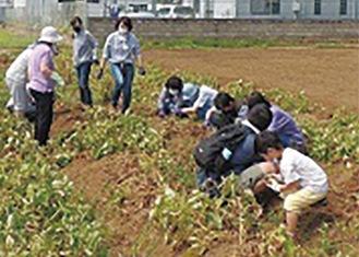 25人の参加者で収穫が行われた
