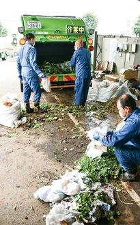 収集した剪定枝の袋に混ざっている可燃物を取り除く収集員(入谷西の作業場)