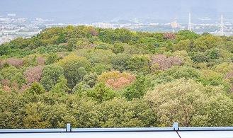 変色した木が散在する座間谷戸山公園=市役所展望台より