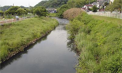 目久尻川で鮎など浮く