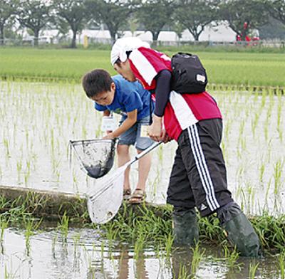 水田で生物調査