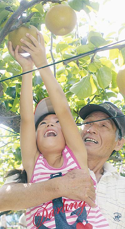 梨の収穫体験に900人
