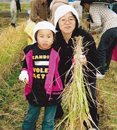 もち米 刈り取る