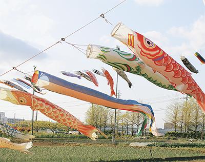 鯉のぼりが大空を泳ぐ