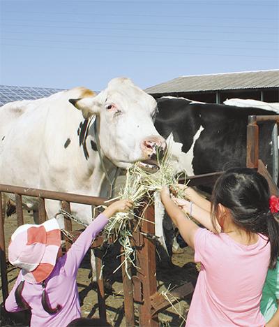 家畜と触れ合う催し