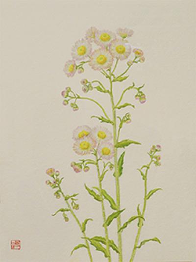 水彩で描く植物画