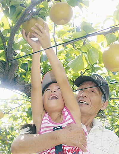梨の収穫イベント