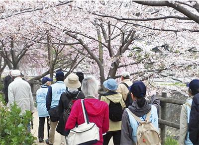 史跡と桜巡る