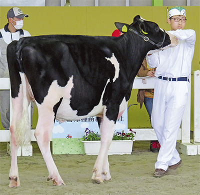 中農牛が中部日本で入賞