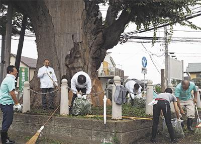 欅(けやき)ロータリーが「大欅」清掃