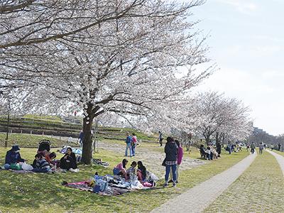 桜とともに地域を盛り上げ