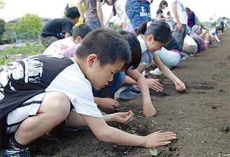 一列に並び、丁寧に種を植える子どもたち