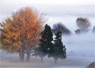 霧に包まれた幻想的な作品
