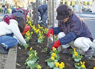 道路沿いの花壇に花を植える(写真は昨年)