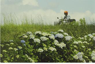 応募総数308点の頂点に輝いた「梅雨の頃」。相模川の土手から撮影した※写真提供/市教委