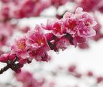 フリルのような花弁が特徴的