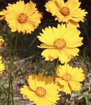 今の時季に、黄色い花を咲かせる