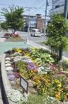 さがみ野駅前の花壇