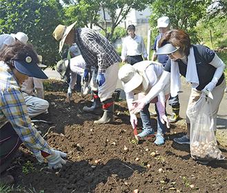 彼岸花の球根を植える座間市観光協会の会員