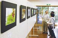 野鳥や植物の写真展
