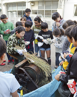 脱穀機を使う児童
