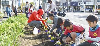 パンジーを植える参加者