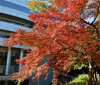 見頃を迎えた大坂台公園の紅葉=21日撮影