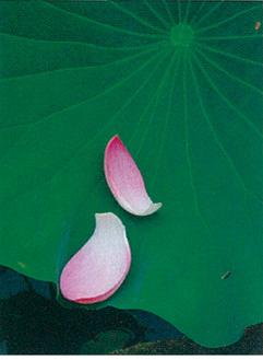 「蓮の気持ち」高山尚人