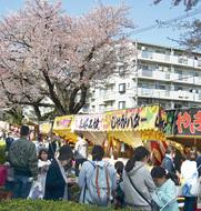 さくら祭り各地で開催