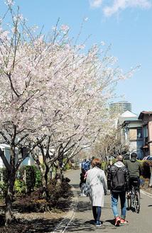 さくら百華の道の桜並木(4月2日撮影)