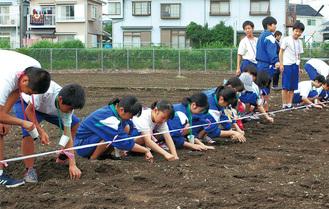 種をまいた西中の生徒たち=2日、西中近くの畑