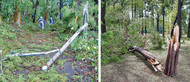 各地で倒木など被害
