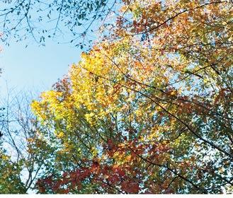 谷戸山公園内の紅葉(11月19日撮影)