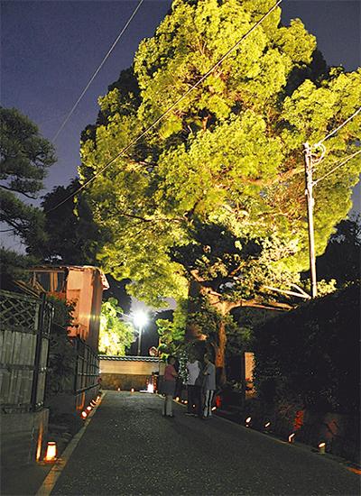 竹灯りでライトアップ