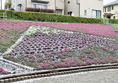 富士山かたどる芝桜